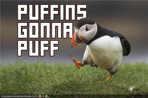 Puffins Gonna Do What Puffins Gonna Do