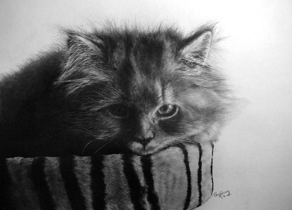 Unbelievable Pencil Art by Paul Lung