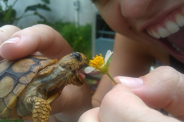 When a Tortoise Eats, Everyone Wins