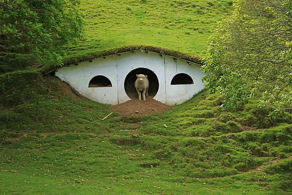 Hobbit Sheep