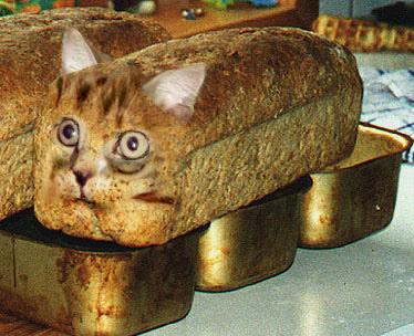 Loaf Cat