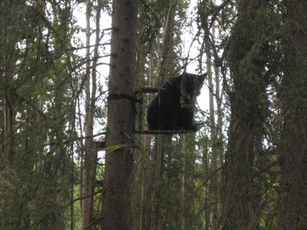 Beary Nice Tree Stand