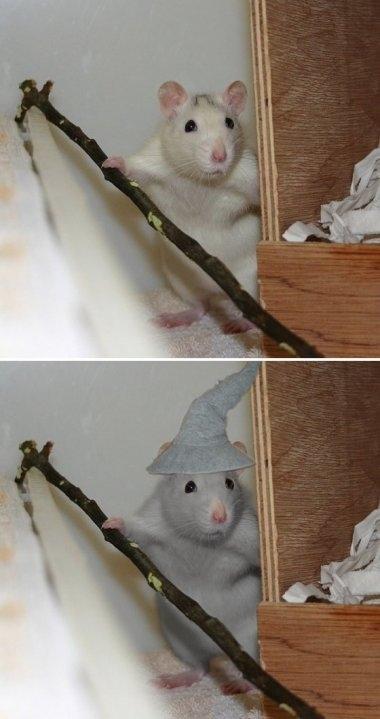 Gandalf Mouse