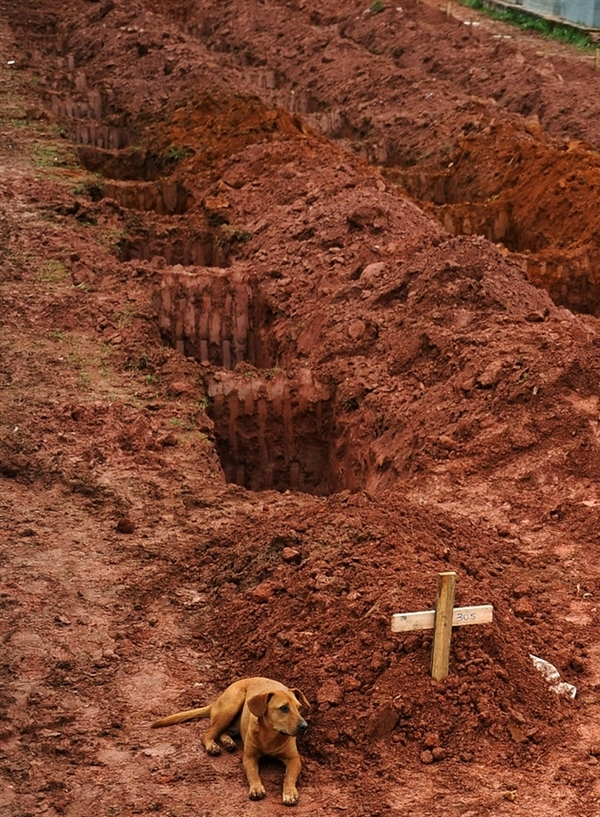 A Dog Takes Its Loyalty to the Grave in Brazil