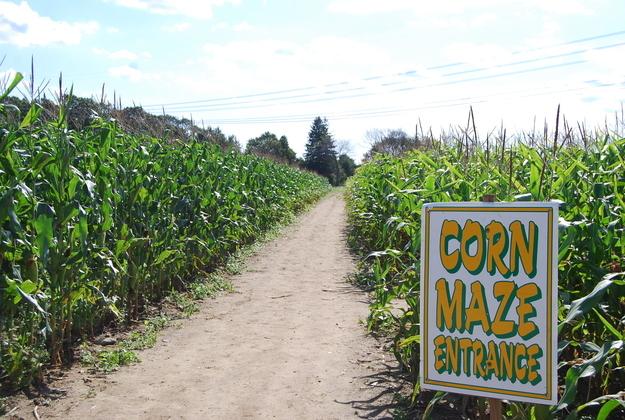 A Newer, Safer Corn Maze
