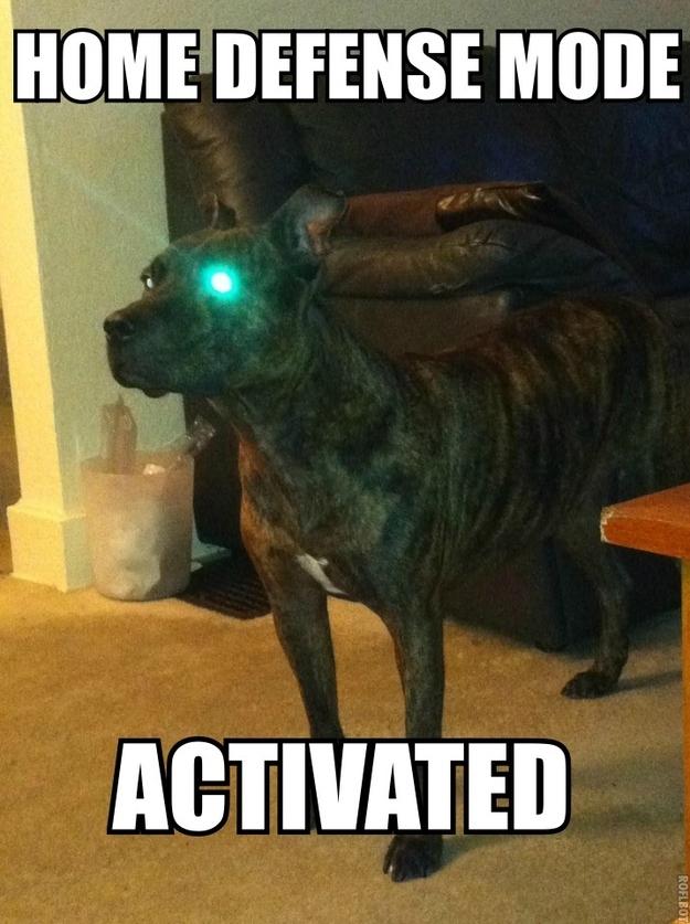 Cyborg Pitbull