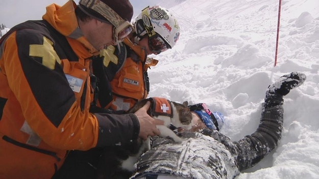 Canadian Avalanche Rescue Cats