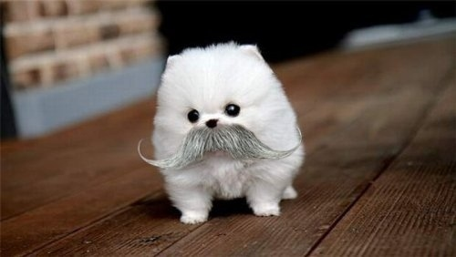 Like Cute Dogs and Mustaches?