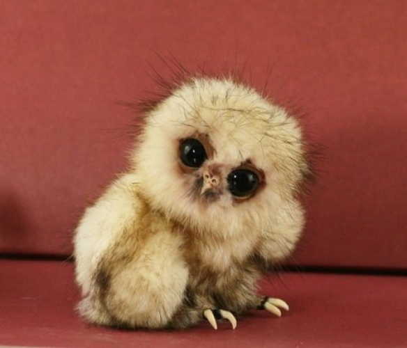 Baby Owl: Adorable Or Terrifying?
