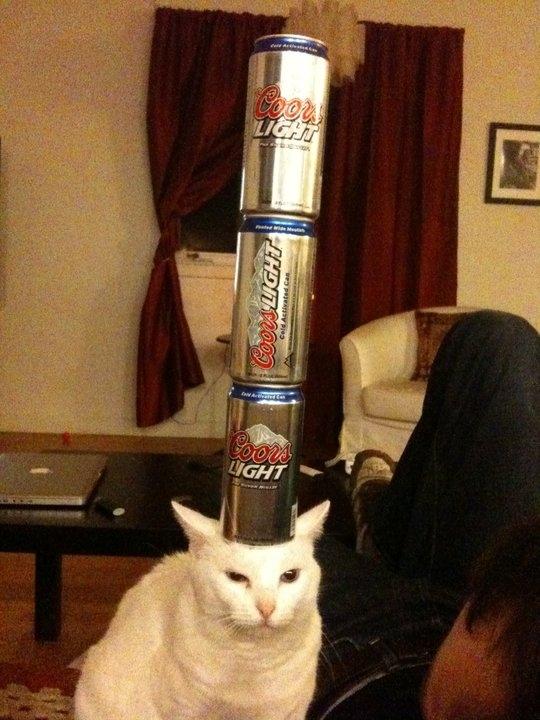 Beer Balancing Kitteh