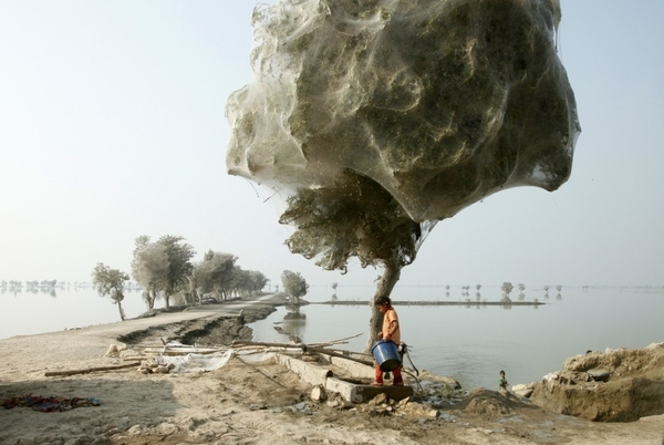 A Girl Walks Past A Tree Covered In Spider Webs
