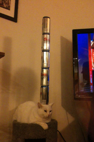 Beer Can Balancing Kitteh Returns!