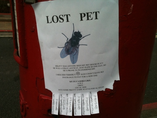 Missing Pet Fly Poster: I Saw This Ad This Morning, I Had to Share the Photo :-)