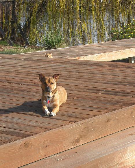Cat Photobombs Dog