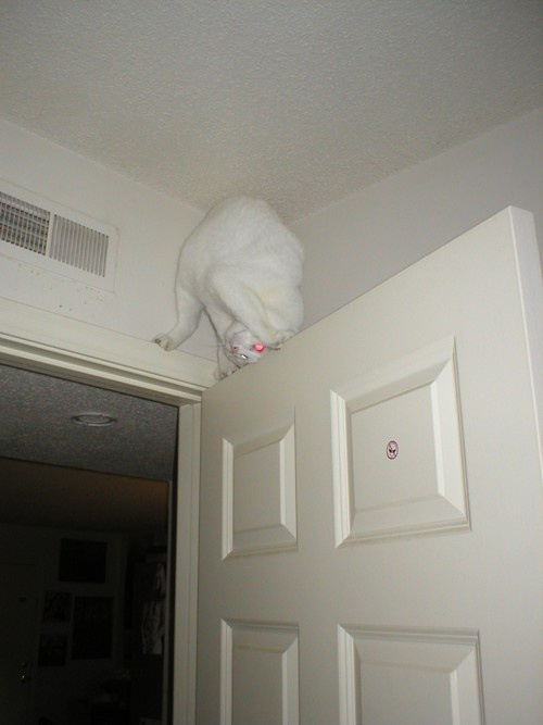 Albino Ninja Cat is Watching You
