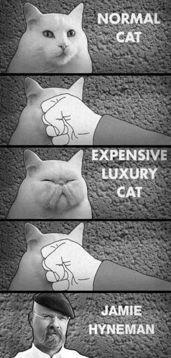 How To Turn Your Cat Into Mythbuster's Jamie Hyneman