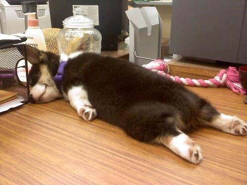 Puppy Planking
