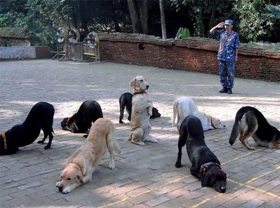 Strange Dog Overlord