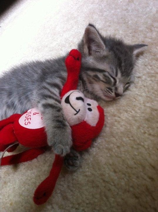 Cutest Kitten Ever.