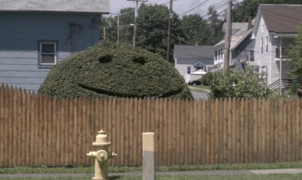 The Bushes Have Eyes
