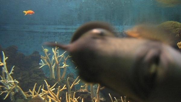 I Want This Photobombing Fish