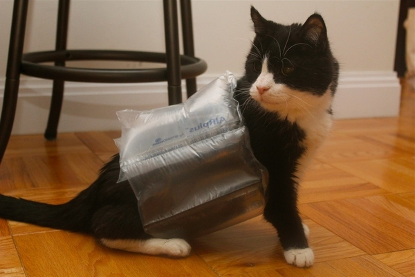 Hurricane Proof Your Cat