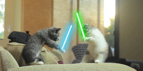 Cute Kittens Alert: 'Jedi Kittens' Goes Viral (Video Link)