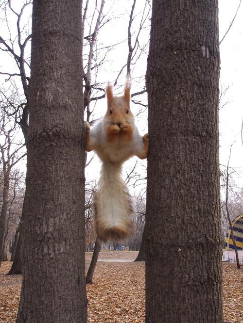 Ninja Squirrel Is Watching You