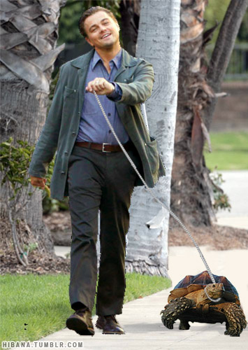 Leonardo DiCaprio Walking His Tortoise