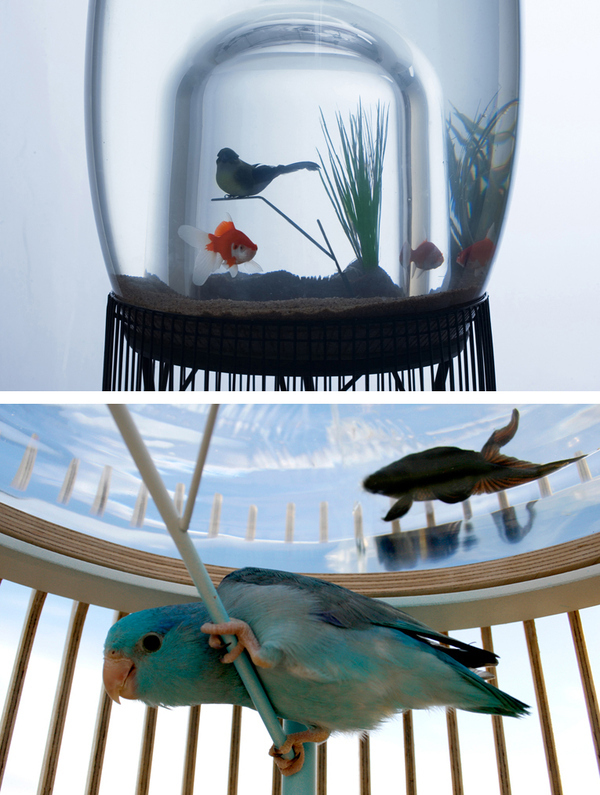 Birdcage Fish Bowl Duplex