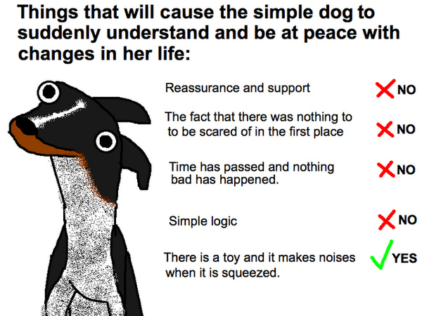 Dogs Dont Understand Basic Concepts Like Moving