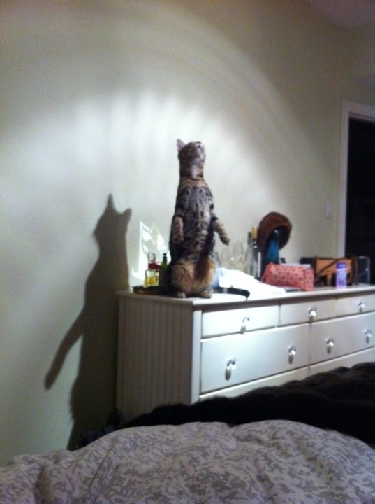 Jesus Cat is Talking to Ceiling Cat