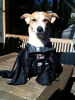 Meet Darth Growl...