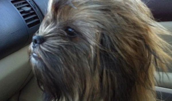 Wookiee Dog