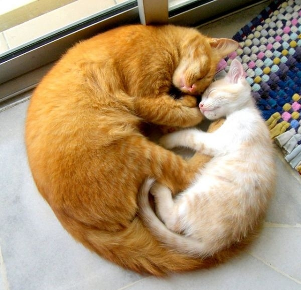 A Kitty Circle