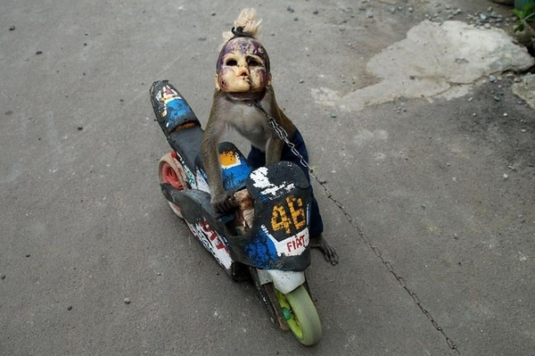 Doll Face Monkey Horror Show