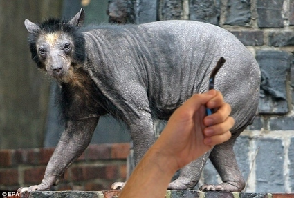 I Am Sorry Bear, But I Must Shave the World!