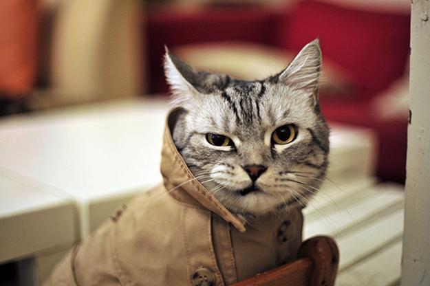 Trenchcoat Cat