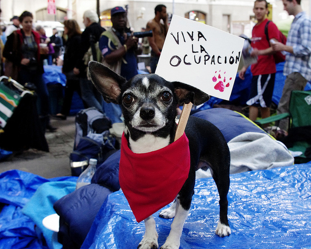 The Most Adorable #OccupyWallStreet Protester