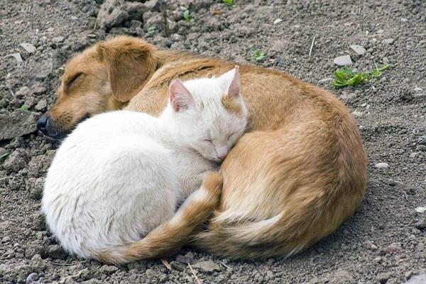 Catdogsleeping