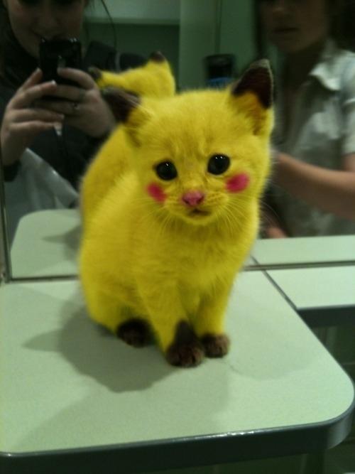 Pikachu Kitty!