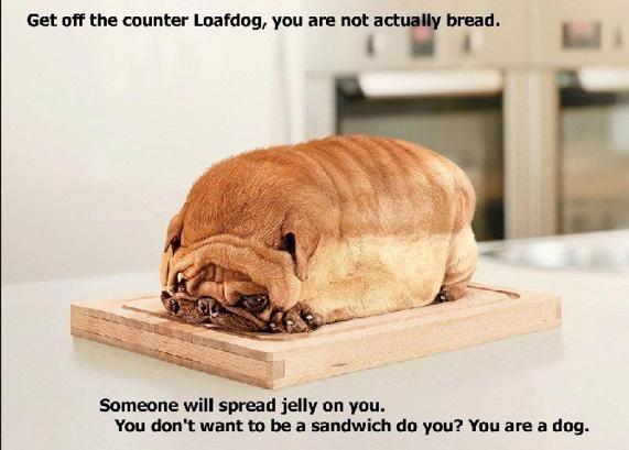 Loaf Dog