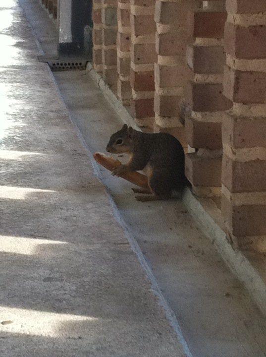 Impressive Squirrel