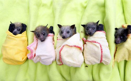 Baby Bats Organized Neatly
