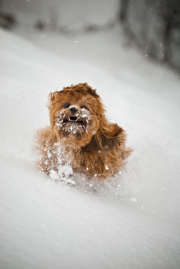 Chewbacca's Childhood Memories of Hoth