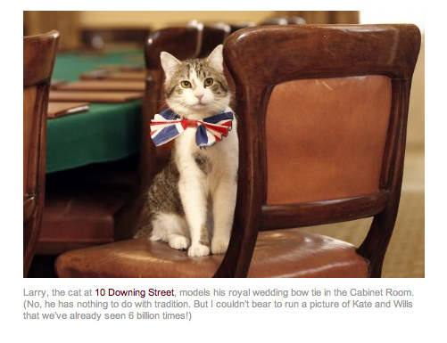 Larry, Official Cat of 10 Downing St, In His Wedding Finery