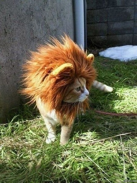Extremely Small Lion