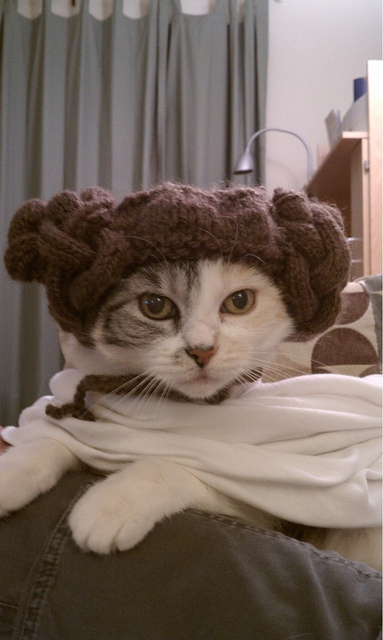 Princess Leia Kitty Hat