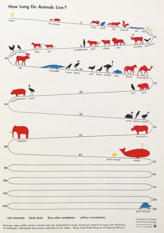 Average Lifespan Of Animals