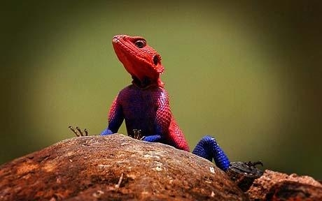 Spiderman Chameleon